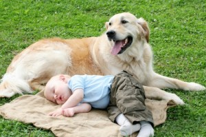 Healthy_Home_baby_sleeping_dog_iStock_000007032339Small_PK-Photos-615x409