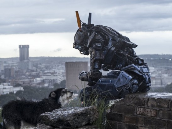 Chappie-Dog-Movie-2015-Wallpaper