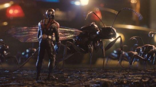 antman_ants